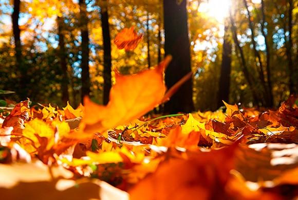 6 coisas legais para fazer no outono